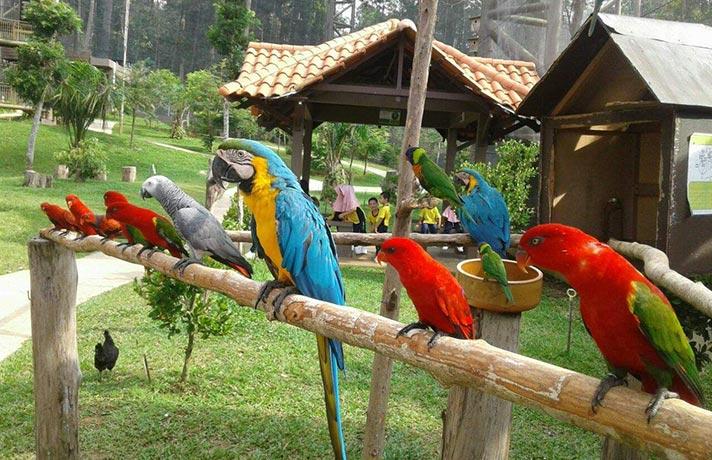 پرندگان زیر نور خورشید