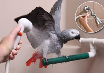 آراستن پرندگان