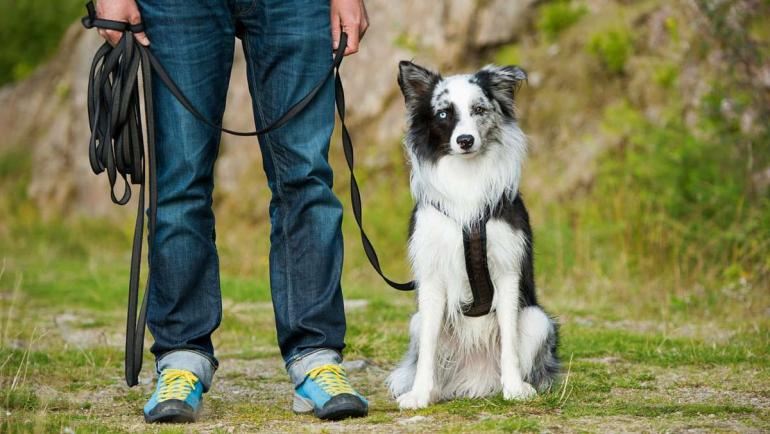 dog-training-methods