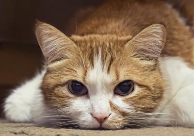 orange-and-white-cat-on-the-floor-sick