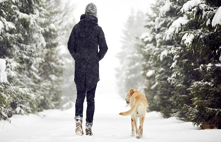 بازی با سگ در زمستان