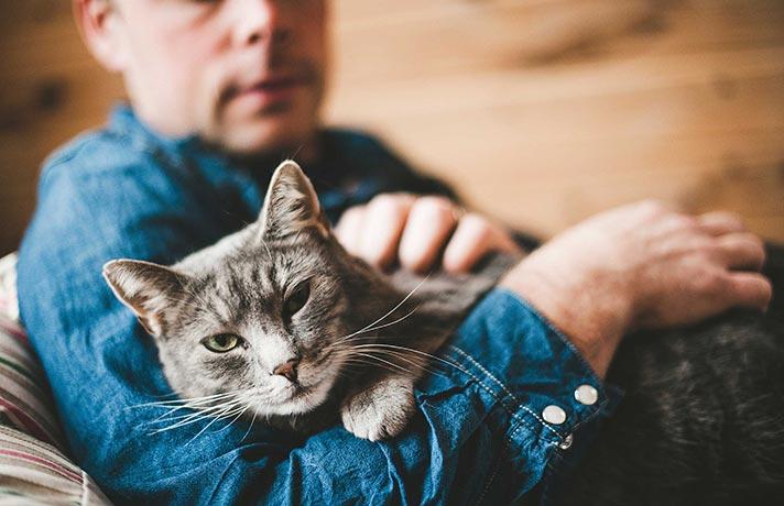 بازی-با-گربه