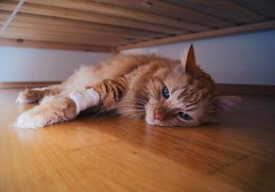 بی اشتهایی گربه