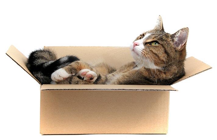 جابجایی گربه