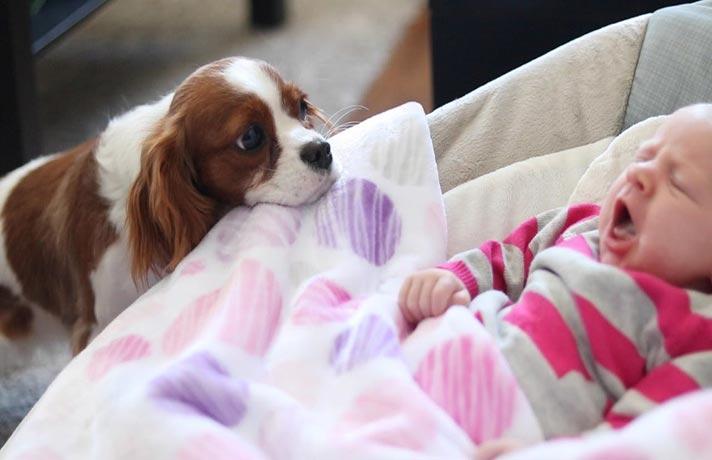 حسادت سگ