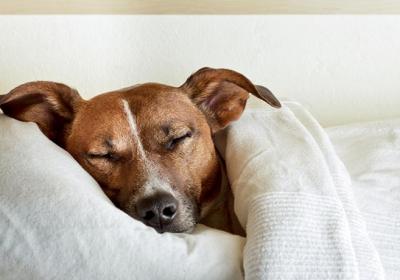 خوابیدن سگ