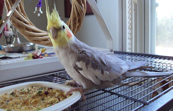 دانه مفید پرنده
