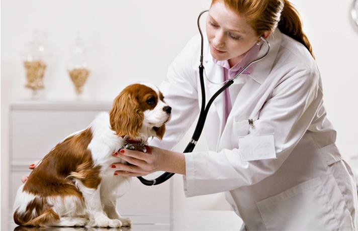 سلامت سگ قسمت اول