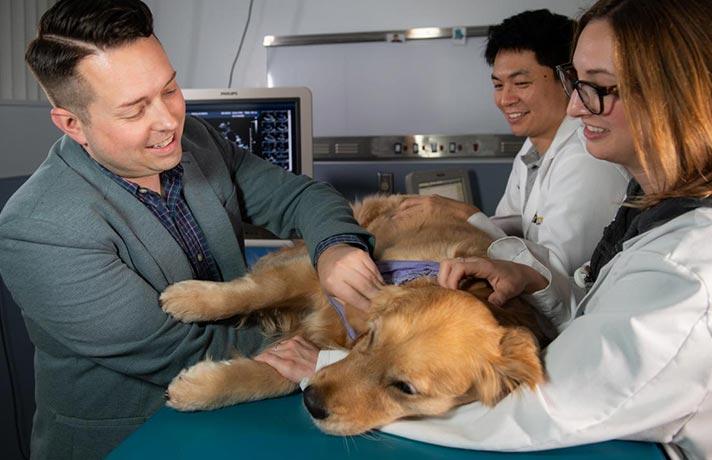 سگ با بیماری دیستمپر