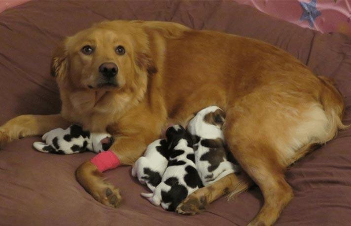 سگ متولد شده