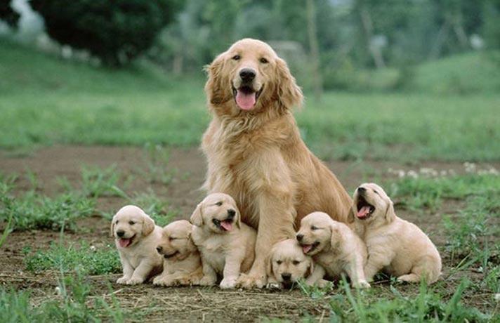 سگ یک ماهه