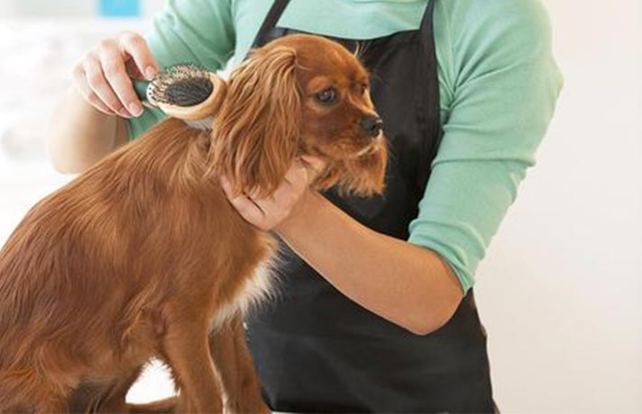 شانه زدن موی سگ