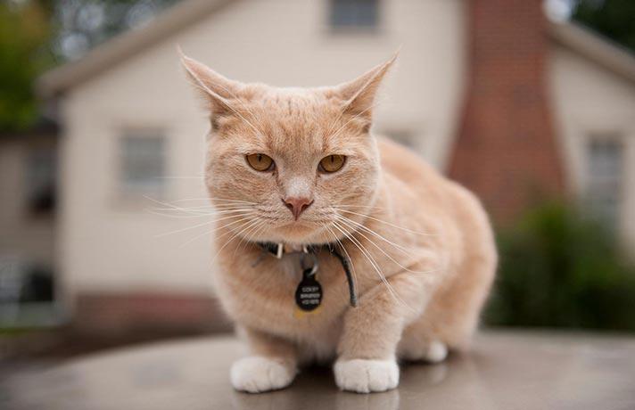 شحصیت گربه