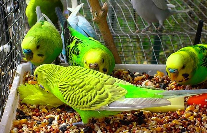 غذای پرنده