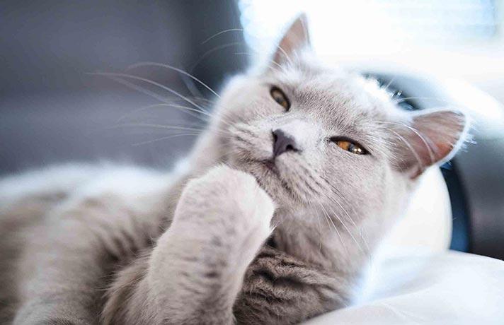 فکر کردن گربه