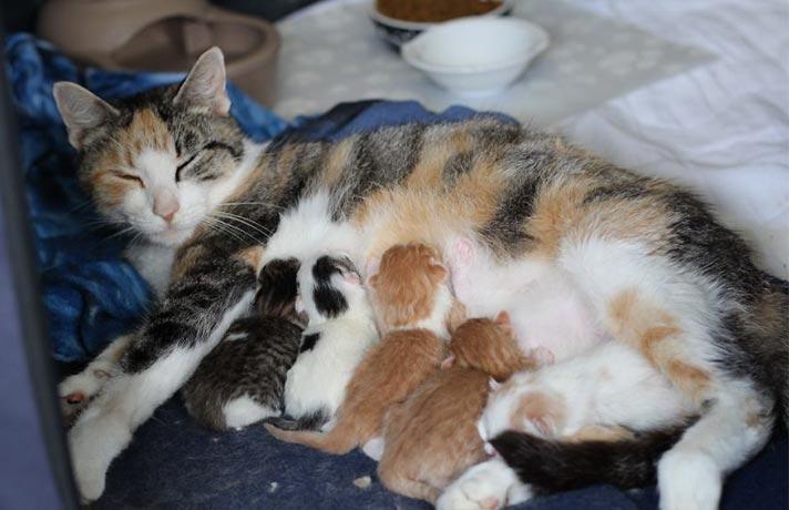 مراقبت گربه مادر