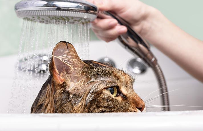 نظافت گربه