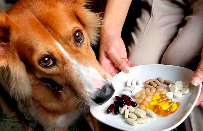 ویتامین در سگ ها