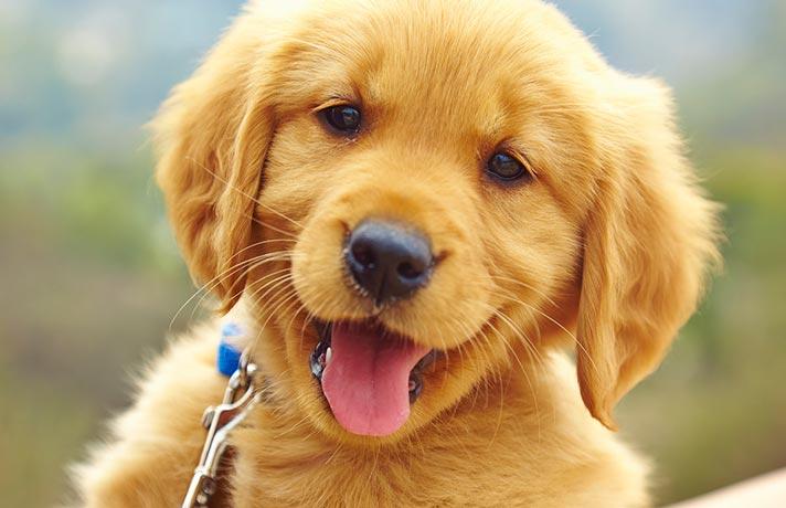 پذیرفتن مسئولیت سگ
