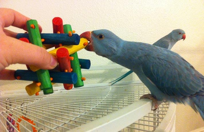 محیط امن پرنده