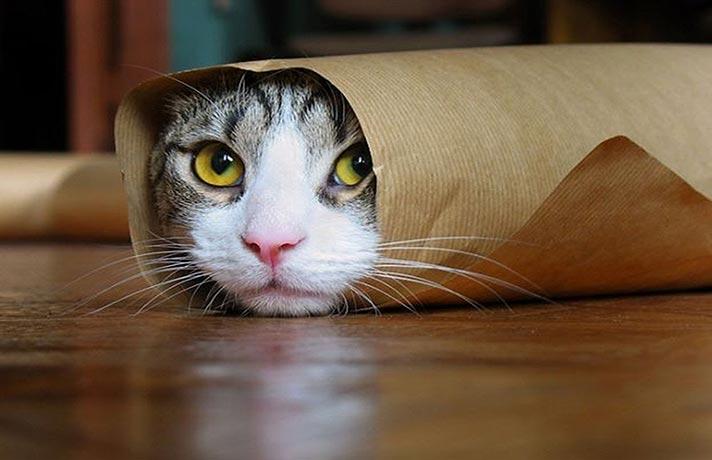 کار های عجیب گربه