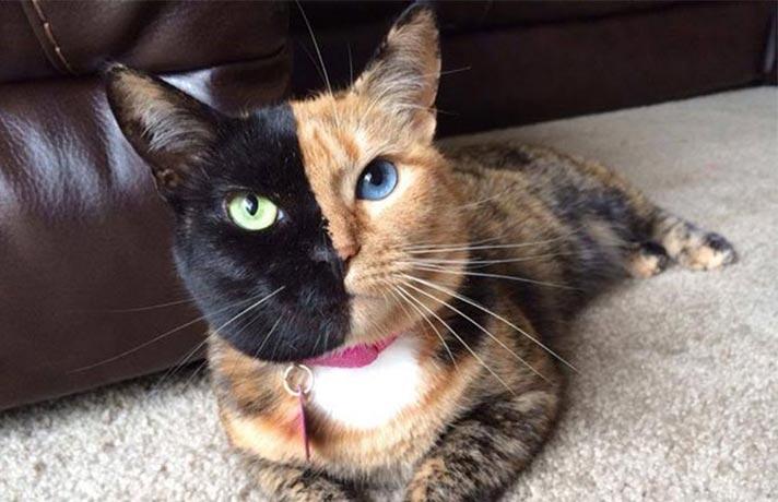 گربه مشهور