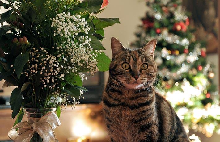 گربه و گیاه سمی