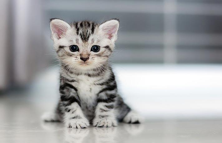 چگونه گربه گم شده خود را پیدا کنیم - مجله پت خرید