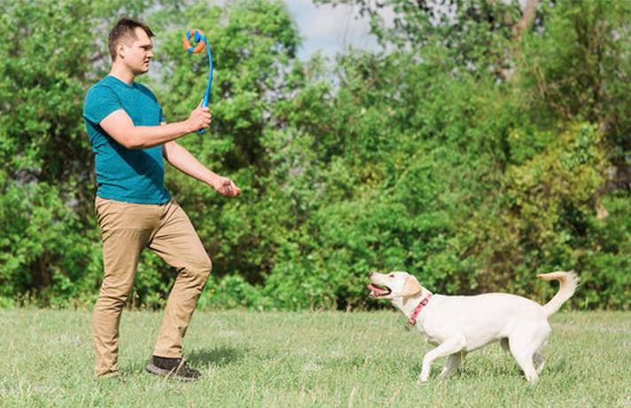 آموزش بیا به سگ