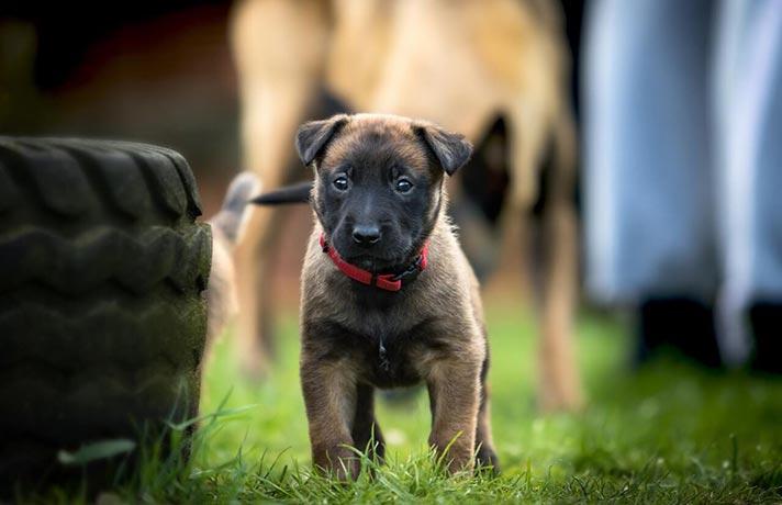 اجتماعی شدن سگ