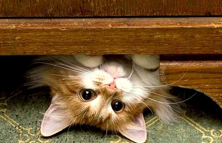 پنهان شدن بچه گربه ها