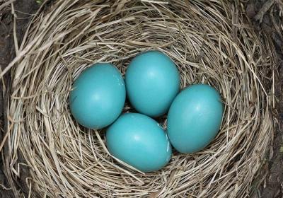 تخم پرنده