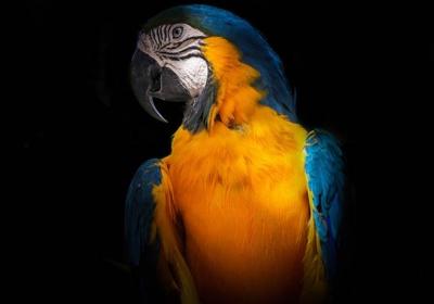 تشخیص سن پرنده