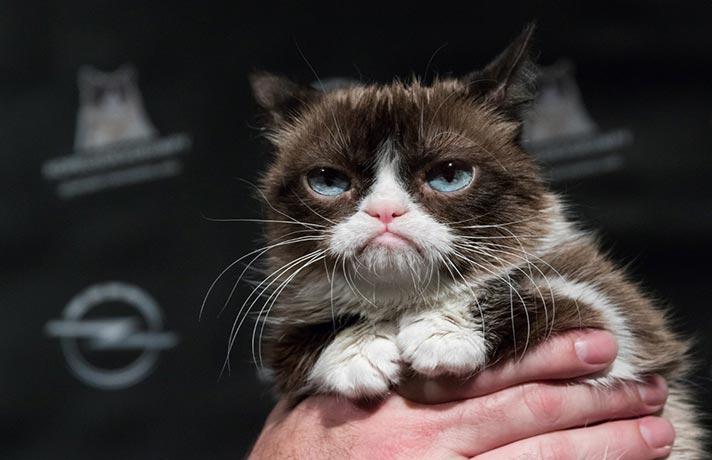 تنفر گربه