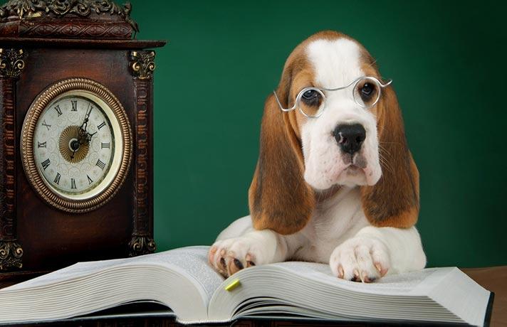 حافظه-سگ-ها