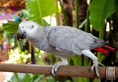 حرف زدن پرنده