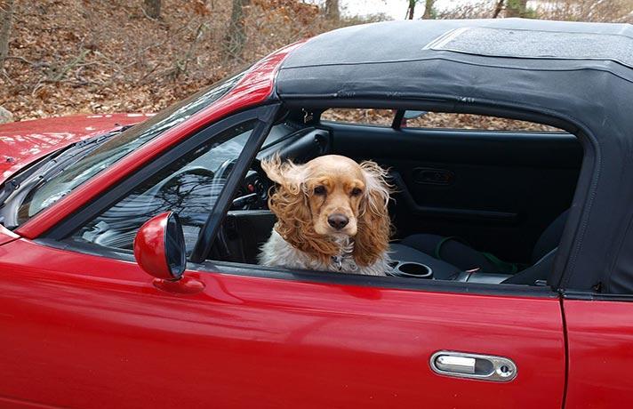 حیوانات در ماشین