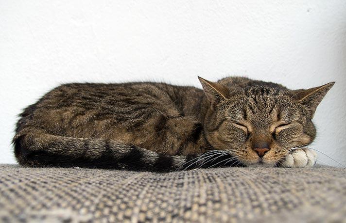 خوابیدن گربه