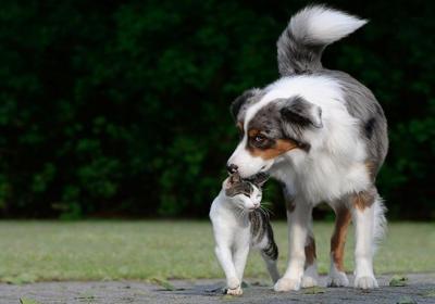 دشمنی گربه و سگ