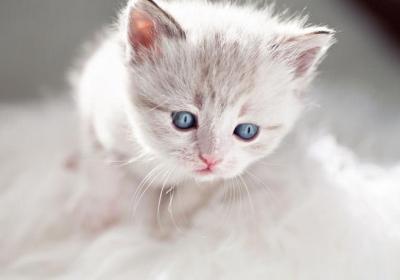 رنگ چشم گربه