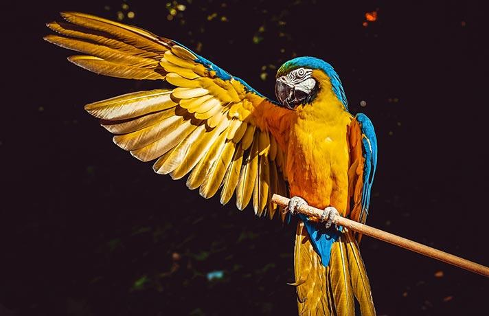 ریختن پر پرنده