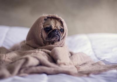 سرماخوردگی سگ