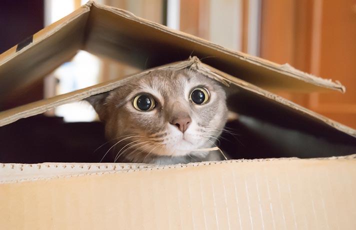 سرگرم کردن گربه