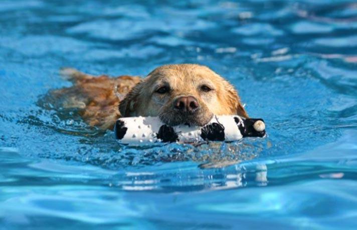سگ شناگر
