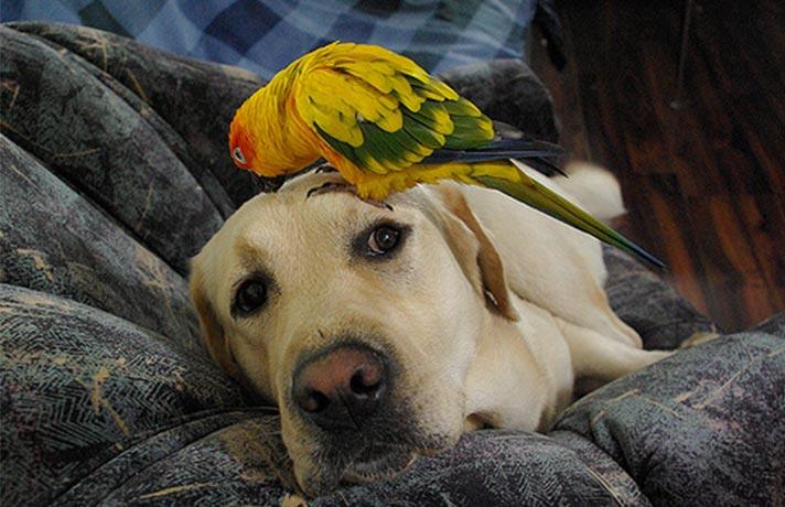 طوطی و سگ
