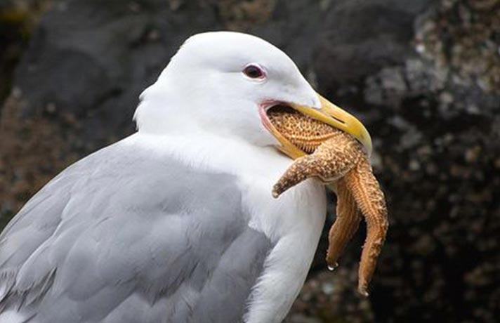 معده پرندگان
