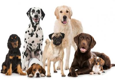 نژاد برتر سگ