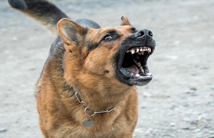 پارس کردن سگ