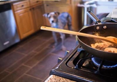 پخت غذا برای سگ