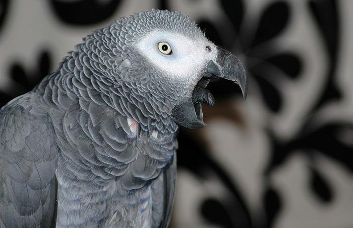 پرنده در حال عطسه